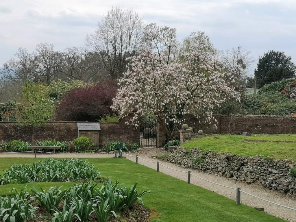 Riverhill Himalayan Gardens, Sevenoaks, Kent, days out review, magnolia