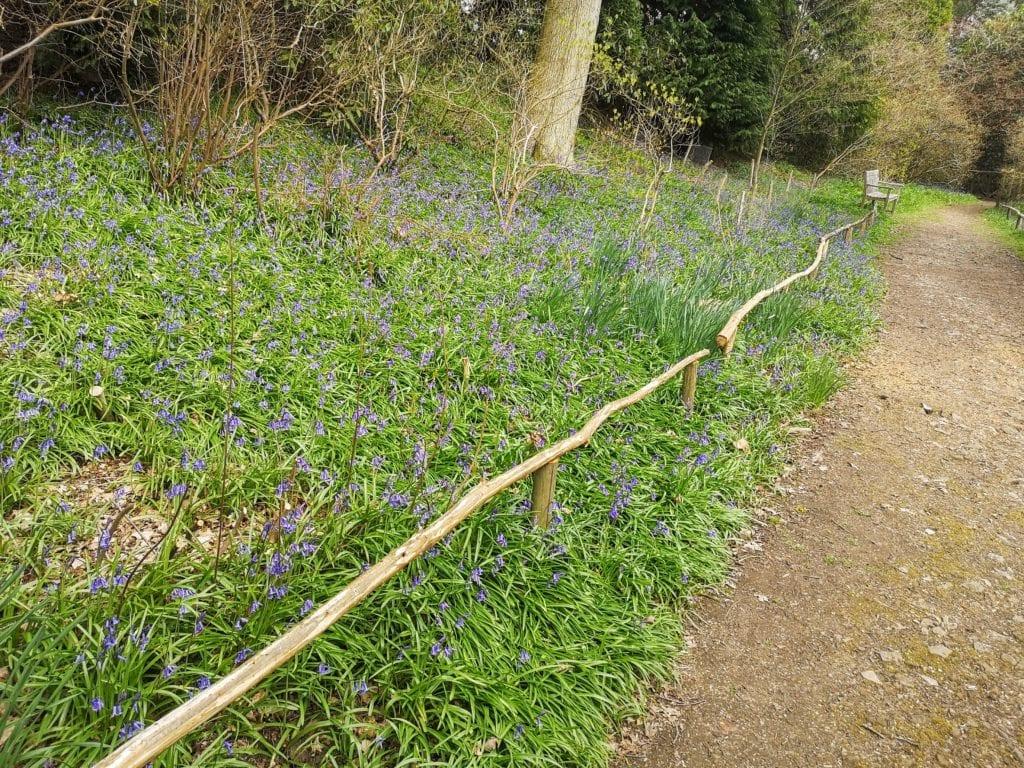 Riverhill Himalayan Gardens, Sevenoaks, Kent, days out review, bluebells