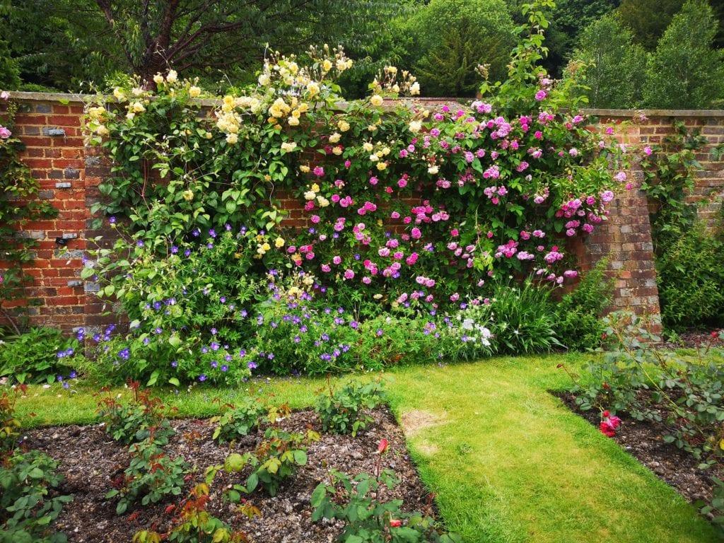 Riverhill Himalayan Gardens, Sevenoaks, Kent, days out review, english rose, rose garden