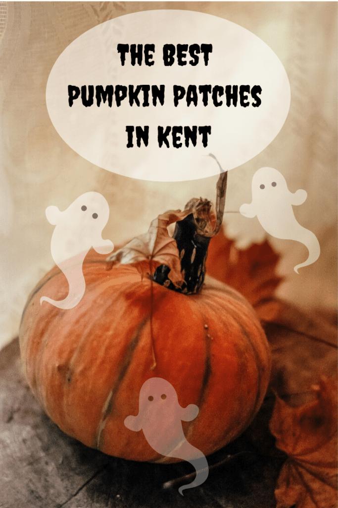 pumpkin, pumpkin picking, pick your own pumpkin, kent, sevenoaks