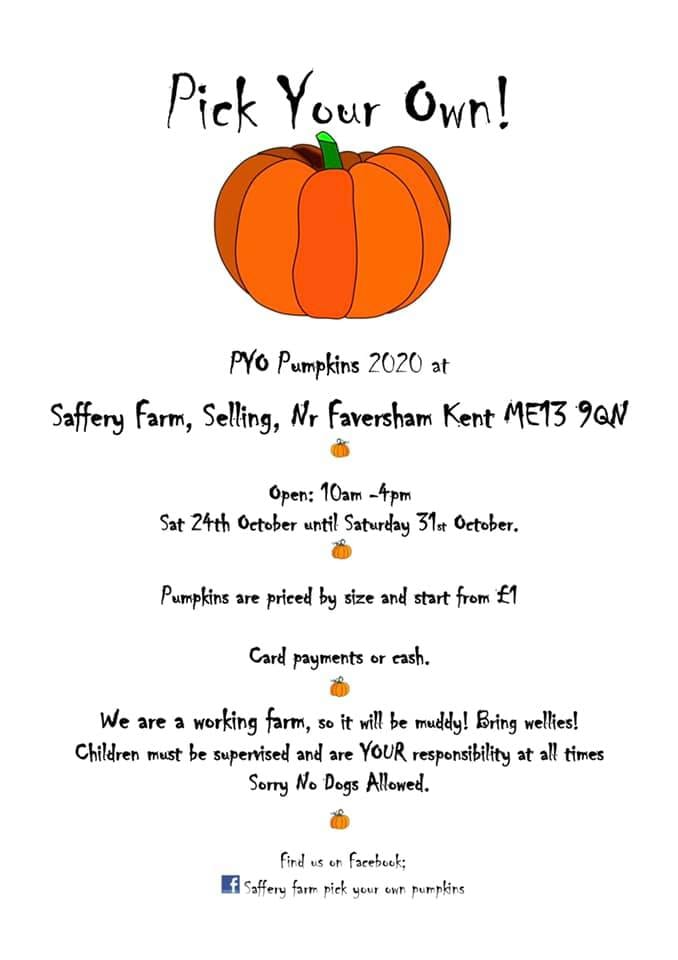 Saffery farm pumpkin picking
