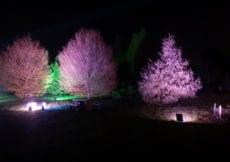 Bedgebury Pinetum Christmas Trail