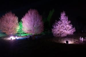 Bedgebury Pinetum Christmas Trail