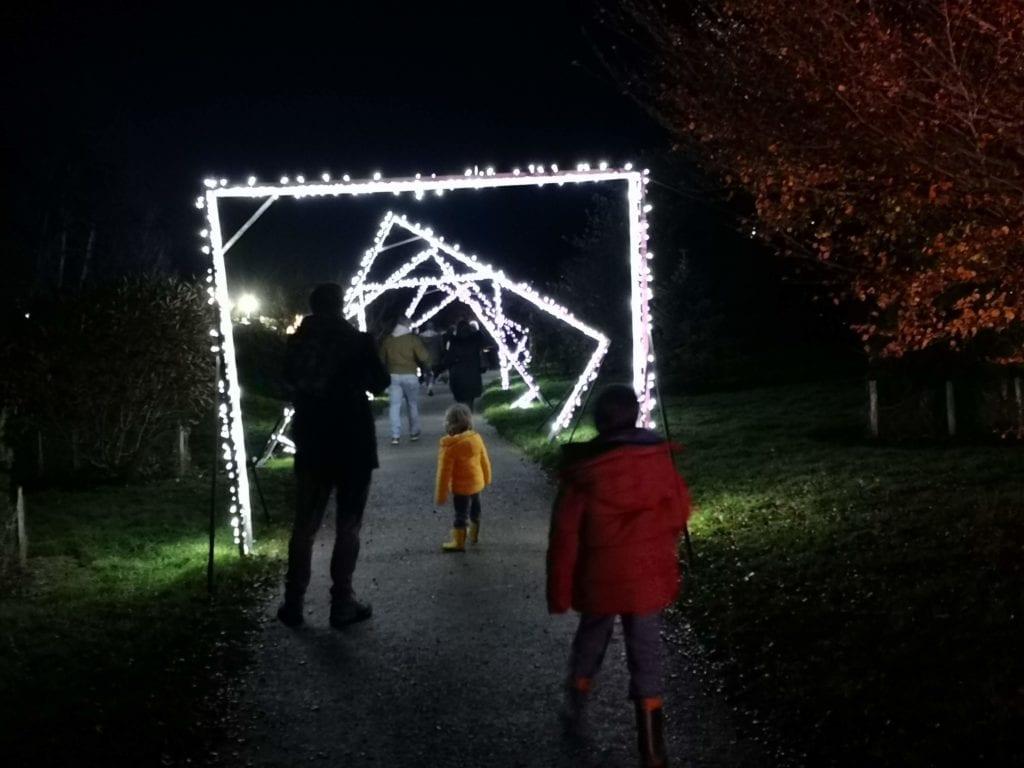 bedgebury pinetum christmas light