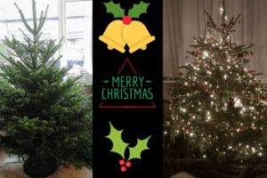 Nordmann Fir real christmas tree from Pines and Needles