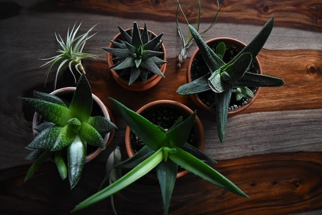 succulent house plants on real wood floor